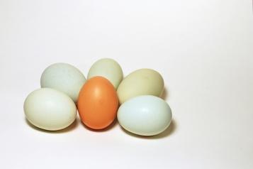 eggs-eggs-eggs-4-1325390